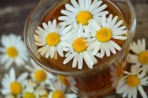 kwiaty rumianku w szklance