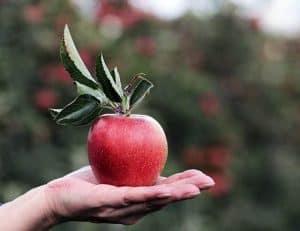 jabłko leżące na dłoni
