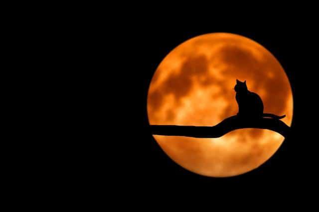 kot w nocy na tle księżyca