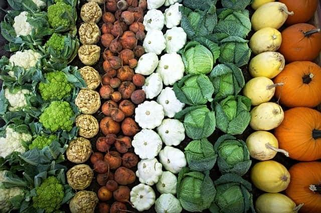 warzywa ułożone w rzędy