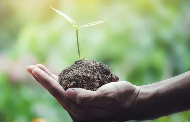 roślina trzymana na dłoni