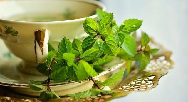 napar ziołowy w filiżance