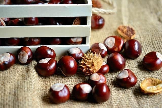 owoce kasztanowca bez łupinek